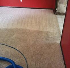 Daisy Carpet Cleaners Minneapolis MN